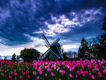Windmolen van Skagit-Vallei Stock Foto's