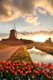 Windmolens in Holland met kanaal Stock Foto
