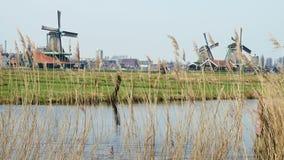 Windmolens in Zaanse Schans stock footage