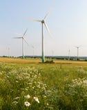 Windmotoren mit wilder Wiese Lizenzfreie Stockbilder