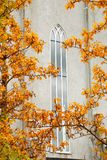 Windo av den Hallgrimskirkja kyrkan, Island Arkivbilder