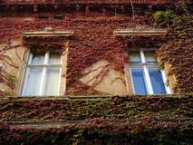 Window. Surrounded with green and red leaves Royalty Free Stock Photography