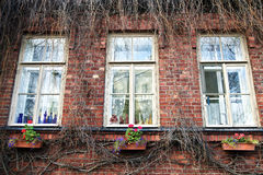 Window. The window which has grown with dry branches Stock Photo