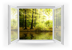 Window. Open window with forest on a background vector illustration