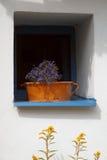 The window Stock Photo