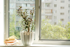 Window. With flowerpot in front view Royalty Free Stock Image