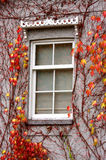 Window. A window decorated with colorful autumn leaves Stock Photos