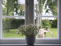 Window. White flowers in flowerpot at window - springtime stock photos