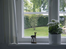 Window. White flowers in flowerpot at window - springtime stock images