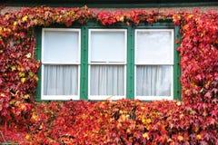 Free Window Royalty Free Stock Photography - 7310567