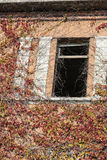 Window of abandoned house with climbing plant in autumn stock photography