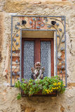 Window with an angel. Window decorated with flowers and an angel Stock Photo