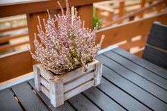Wooden Table on patio, terrace with autumn composition with heather in a basket . Autumn composition. Cafe table with stock photography