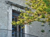 Window balcony and branches details Royalty Free Stock Photography