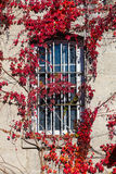 Window with Bars and Leaves Stock Image