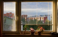 Window blinds. Partially open window blinds with house plants on sill royalty free stock image