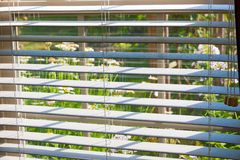 Window with blinds overlooking flower garden. Stock Photos