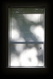 Window Blinds. With tree shadows reflected Stock Photography