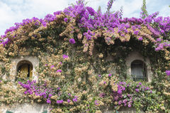 Window and bouganvillea Stock Images