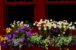 WINDOW BOX. SUMMER FLOWERS IN A WINDOW BOX Stock Photos