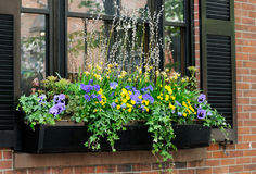 Window Box Close-up. Elegant window box in Beacon Hill, Boston Stock Image