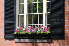 Window Box Detail Royalty Free Stock Photo