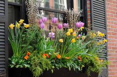 Window Box Flower Arrangement. Elegant window box in Beacon Hill, Boston Stock Images