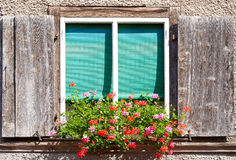 Window box with flowers Stock Photos