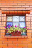 Window and box with flowers Stock Photography