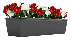 Window box of Madagascan Periwinkle Royalty Free Stock Photography