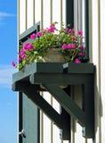 Window box in Monterey, California Royalty Free Stock Image