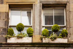 Window boxes with green plants Stock Images