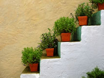 Window boxes on stairs decoration Stock Images