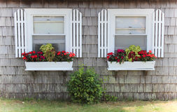 Window boxes. White window boxes full of blooms on cape home Royalty Free Stock Photography