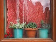 A window with bright red curtains: a brown vintage frame, but a window sill three houseplants in clay pots. Window with bright red curtains: a brown vintage Royalty Free Stock Photos