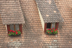 Window on building roof with flowers Stock Image