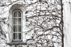 Window in the bush. The photography of lonely window circled by bush royalty free stock image