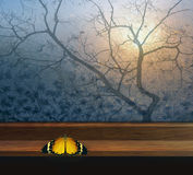 Window with butterfly and tree for window. By autumn royalty free stock photo