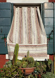 Window with cacti, Burano, Venice Stock Photography