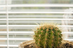 Window cactus Royalty Free Stock Photography