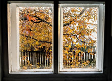The window can be seen in the autumn the tree and fence Stock Photo