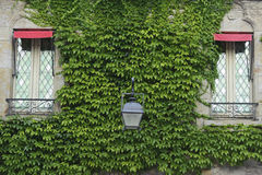 Window in the castle covered in green ivy. In Carcassone Royalty Free Stock Photo