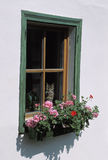 Window with cat and geranium. Cat looking outside a windows, Tyrol, Austria. Geraniums are very popular flowers for windows Royalty Free Stock Photo