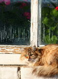 Window cat Royalty Free Stock Images