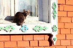Window cat Stock Photo