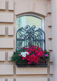 Window in a classic style and a box of flowers Royalty Free Stock Photos