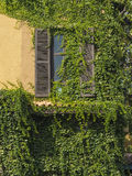 Window with climber plants. Royalty Free Stock Photos