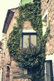 Window and climbing plant. In a small town Stock Image