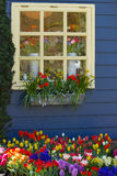 Window with colorful flowers in spring. Window in blue wall with colorful flowers in spring Stock Photo