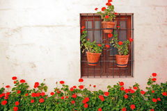 Window with colorful plants. Royalty Free Stock Images